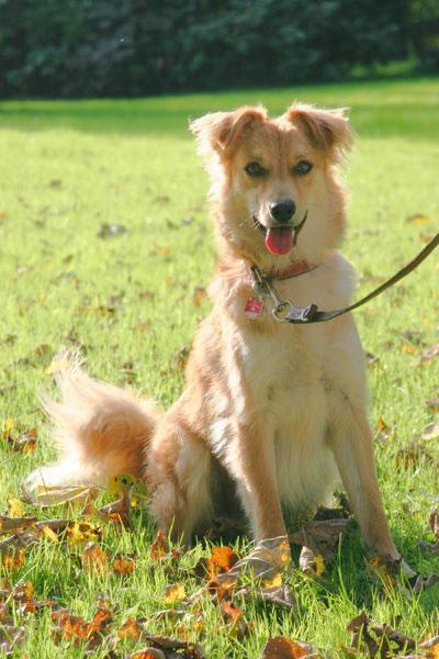 Basque Shepherd Dog Pictures